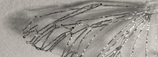 cropped-beaded-birds-wing.jpg